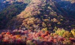 Βουνό με τα φύλλα φθινοπώρου Στοκ φωτογραφίες με δικαίωμα ελεύθερης χρήσης