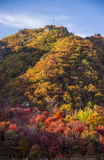 Βουνό με τα φύλλα φθινοπώρου Στοκ Εικόνες