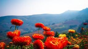 Βουνό λουλουδιών αχύρου Στοκ φωτογραφίες με δικαίωμα ελεύθερης χρήσης