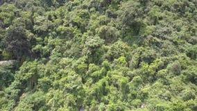Βουνό που καλύπτεται με το δάσος και τα σπίτια στην ανώτερη άποψη λόφω απόθεμα βίντεο