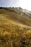 Βουνό σιταριού Στοκ φωτογραφία με δικαίωμα ελεύθερης χρήσης
