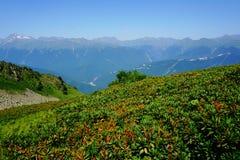 Βουνό στα λουλούδια Στοκ φωτογραφία με δικαίωμα ελεύθερης χρήσης