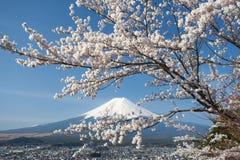 Βουνό Φούτζι και sakura ανθών κερασιών την άνοιξη Στοκ Εικόνες