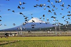 Βουνό Φούτζι στην Ιαπωνία Στοκ φωτογραφία με δικαίωμα ελεύθερης χρήσης