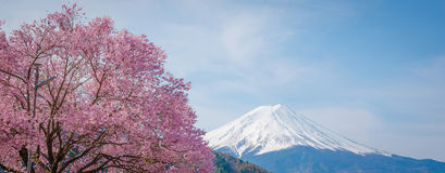 Βουνό Φούτζι την άνοιξη, άνθος Sakura κερασιών Στοκ εικόνα με δικαίωμα ελεύθερης χρήσης