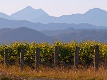 βουνό φόντου vinyard Στοκ Εικόνα