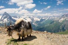 Βουνό Dombai, Καύκασος, Ρωσία στοκ εικόνες με δικαίωμα ελεύθερης χρήσης