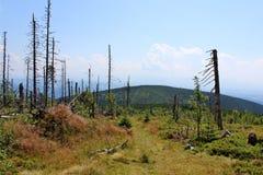 Βουνό Gora Babia - Beskid Zywiecki, Πολωνία στοκ εικόνες
