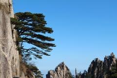 Βουνό Huangshan με το ενιαίο δέντρο Στοκ φωτογραφία με δικαίωμα ελεύθερης χρήσης