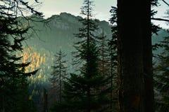 Βουνό ladscape με τα δέντρα Στοκ φωτογραφίες με δικαίωμα ελεύθερης χρήσης