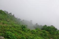 Βουνό Lanscape Fogy στα λουλούδια Clos άσχημου καιρού και Edelweiss Στοκ Φωτογραφία