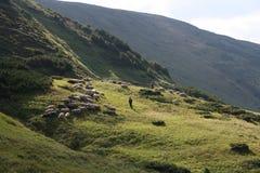 Βουνό sheeps Στοκ Εικόνες