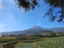 Βουνό Slamet στοκ φωτογραφίες