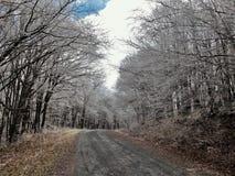 Βουνό Whitetop στοκ εικόνες με δικαίωμα ελεύθερης χρήσης