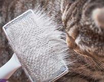 Βουρτσίζοντας cat's γούνα στοκ εικόνα