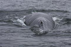 βουτήξτε στη φάλαινα Στοκ Εικόνες