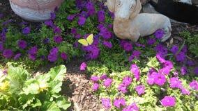 Βουτυρώδης πεταλούδα στοκ φωτογραφίες