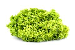 βουτύρου πράσινο μαρούλ&iota Στοκ Εικόνα