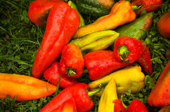 Βουλγαρικά κόκκινα πιπέρια Στοκ φωτογραφία με δικαίωμα ελεύθερης χρήσης