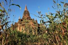 Βουδιστικοί ναοί σε Bagan Στοκ φωτογραφίες με δικαίωμα ελεύθερης χρήσης