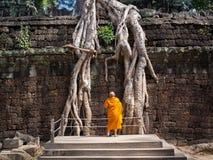 Βουδιστικός μοναχός που εξετάζει τις γιγαντιαίες ρίζες δέντρων στο ναό Angkor, Καμπότζη στοκ εικόνες