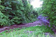 Βούρτσα και πολύβλαστο δάσος στοκ εικόνες με δικαίωμα ελεύθερης χρήσης