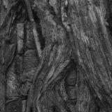 Βούδας που κρύβεται Στοκ φωτογραφία με δικαίωμα ελεύθερης χρήσης