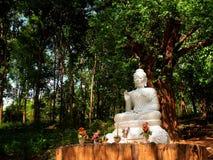 Βούδας στην κοιλάδα Στοκ Εικόνες