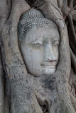 Βούδας staue Στοκ εικόνα με δικαίωμα ελεύθερης χρήσης