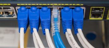 Βούλωμα καλωδίων του τοπικού LAN utp στο διακόπτη δικτύων Στοκ εικόνες με δικαίωμα ελεύθερης χρήσης