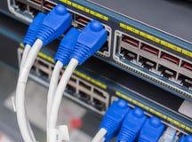 Βούλωμα καλωδίων του τοπικού LAN utp στο διακόπτη δικτύων Στοκ Εικόνες