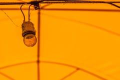 βολβοί παλαιοί Στοκ φωτογραφία με δικαίωμα ελεύθερης χρήσης