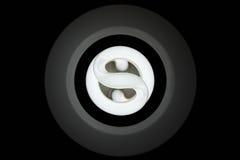 Βολβός βολφραμίου στοκ φωτογραφίες με δικαίωμα ελεύθερης χρήσης