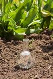 Βολβός με το σαφές νερό στο ξηρό χώμα Στοκ φωτογραφία με δικαίωμα ελεύθερης χρήσης