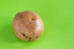 Βολβός πατατών στο πράσινο υπόβαθρο Στοκ φωτογραφίες με δικαίωμα ελεύθερης χρήσης