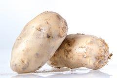 Βολβός πατατών Στοκ εικόνα με δικαίωμα ελεύθερης χρήσης