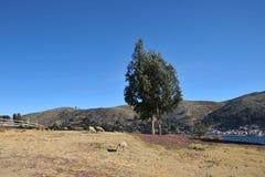 Βολιβιανό χωριό στις ακτές της λίμνης Titicaca Στοκ Φωτογραφία
