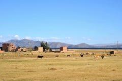 Βολιβιανό χωριό στις ακτές της λίμνης Titicaca Στοκ εικόνα με δικαίωμα ελεύθερης χρήσης