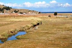 Βολιβιανό χωριό στις ακτές της λίμνης Titicaca Στοκ Εικόνα