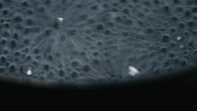 Βράζοντας νερό σε ένα δοχείο απόθεμα βίντεο