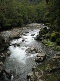 Βράζοντας ποταμός μέσω ενός δάσους Στοκ Φωτογραφία