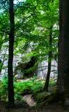 Βράχοι δασικών δέντρων τοπίων Στοκ φωτογραφία με δικαίωμα ελεύθερης χρήσης