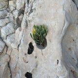Βράχοι θάλασσας στοκ φωτογραφία