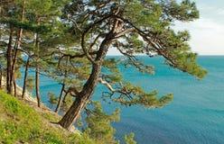 Βράχοι και δάσος Στοκ Εικόνες
