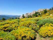 Βράχοι και ανθίζοντας λουλούδια στα βουνά Cevennes στη Γαλλία Στοκ εικόνα με δικαίωμα ελεύθερης χρήσης