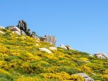 Βράχοι και ανθίζοντας λουλούδια στα βουνά Cevennes στη Γαλλία Στοκ φωτογραφία με δικαίωμα ελεύθερης χρήσης
