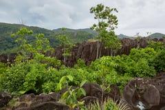 Βράχοι και ζούγκλα Στοκ φωτογραφία με δικαίωμα ελεύθερης χρήσης