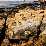 Βράχοι και πέτρες στην ακτή Pacific Coast Στοκ Φωτογραφία