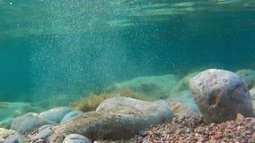 Βράχοι και φύκια που βλέπουν από υποβρύχιο απόθεμα βίντεο