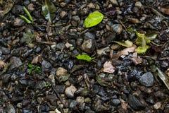 Βράχοι και φύλλα Στοκ φωτογραφία με δικαίωμα ελεύθερης χρήσης